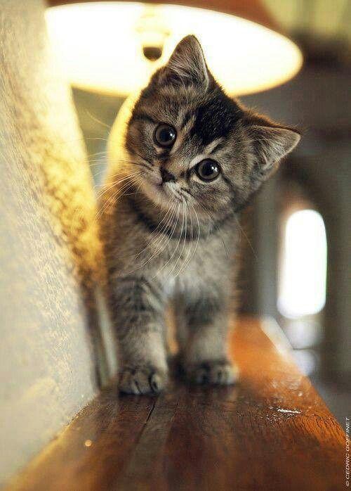 Citáty o kočkách, kočičí citáty