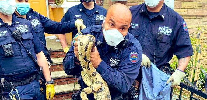 New Yorská policie v akci, zatčená krajta