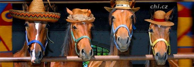 Vtipy o koních