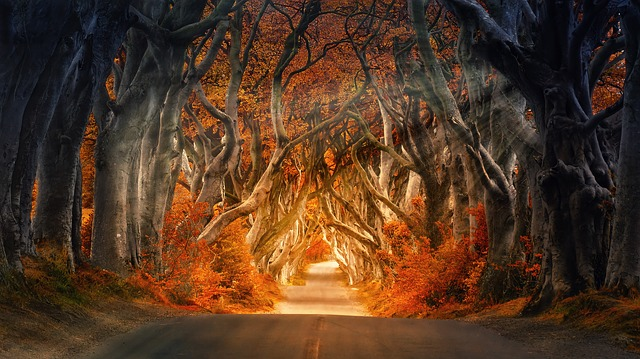 Magický realismus jako odpověď na surovou realitu realismu