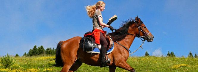 Vzhled a stavba koně