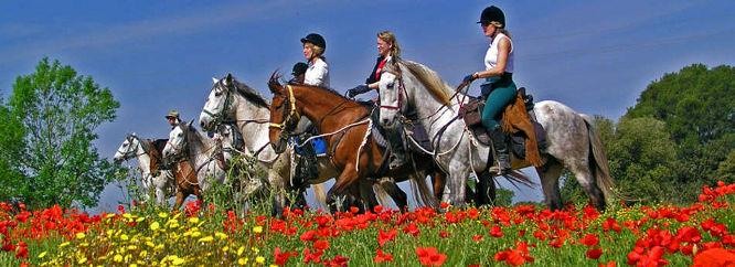Koně, plemena koní
