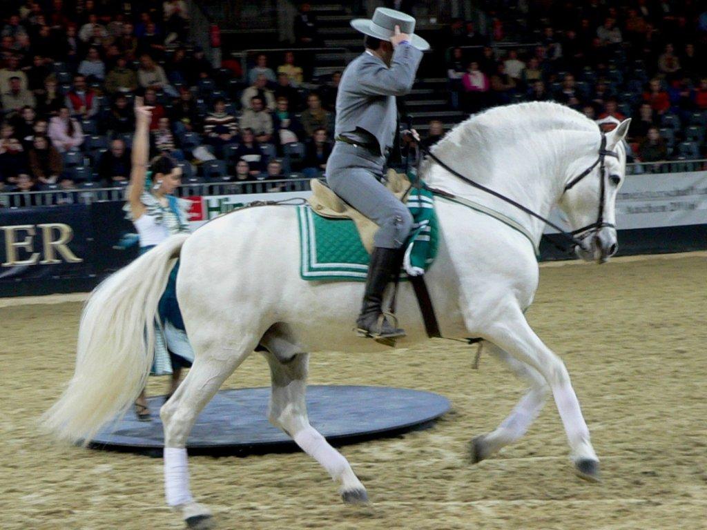 Andaluský kůň