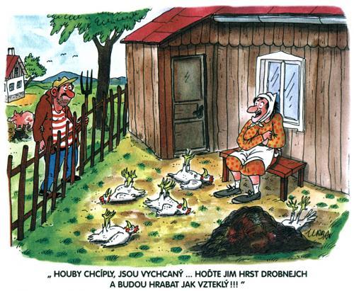 Chcíplé slepice, kreslený obrázek 1028