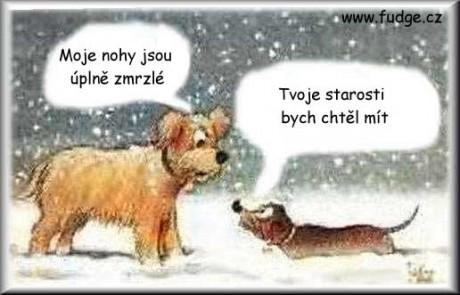 Pes má zmrzlého pindíka
