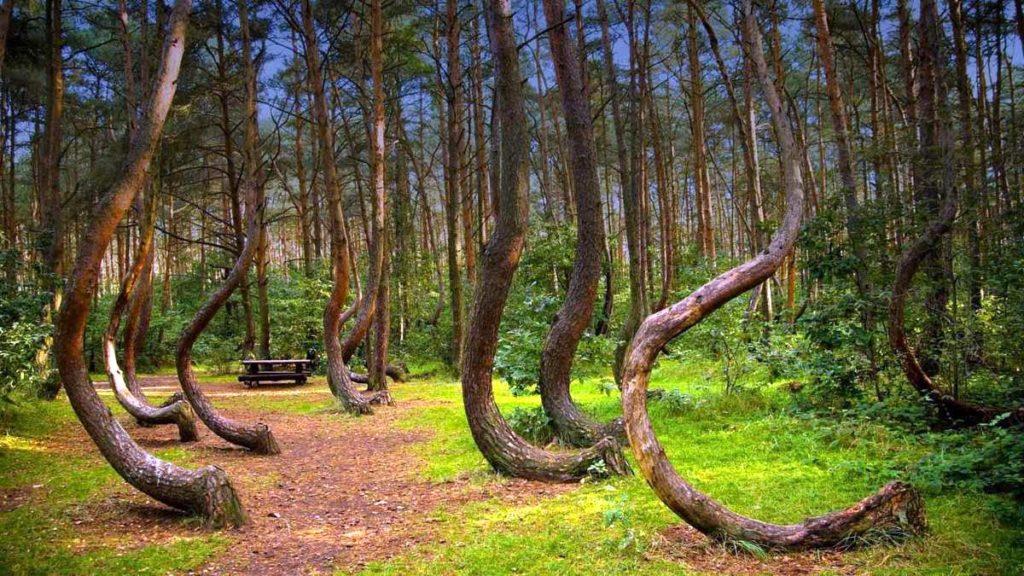 Záhadný les v Polsku stále odolává pokusům o vysvětlení