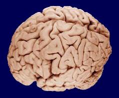 Záhady mozku