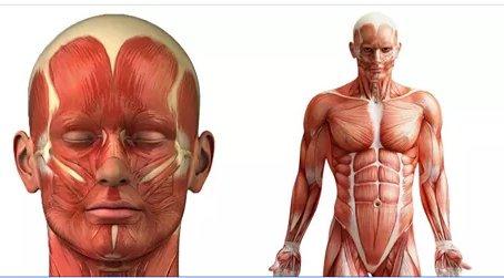 Fakta a zajímavosti o lidském těle
