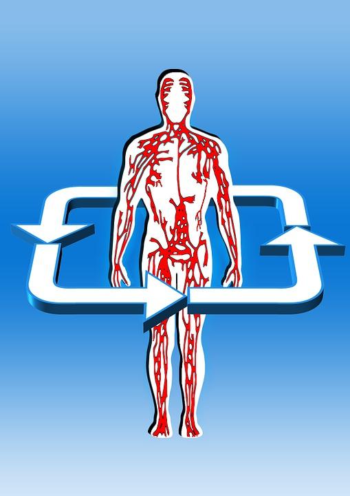 Krevní oběh: jak zlepšit, rizika a výhody správného oběhu krve