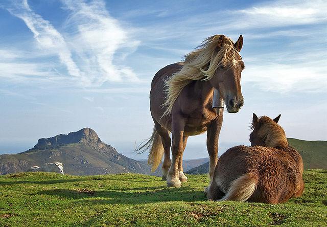 Citáty o koních