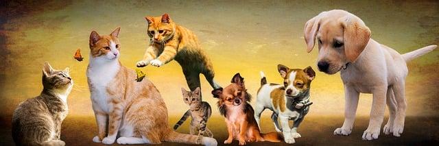 Zvířata v citátech od lidí, motta a citáty o zvířatech
