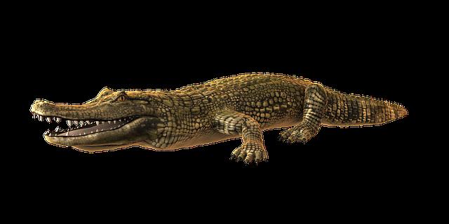 Žena si chtěla pohladit aligátora a zemřela