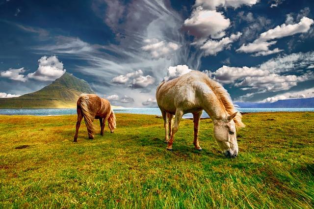 Seznam filmů o koních, nejkrásnější filmy o koních
