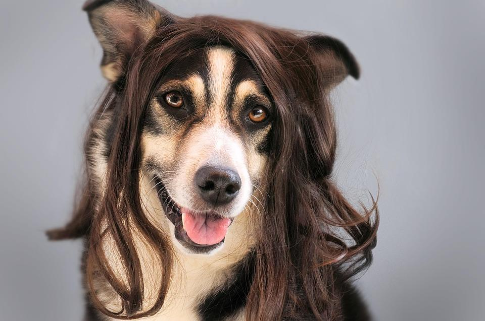 Pes s vlasy