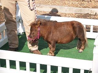 Nejmenší kůň na světě