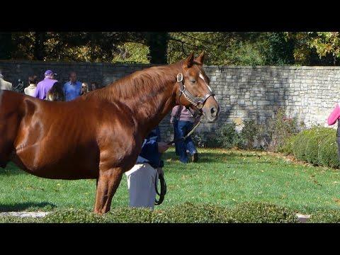 Fakta a zajímavosti o koních