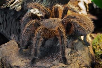 Zajímavá fakta o pavoucích