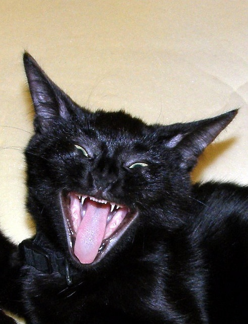 Ailurofobie - strach z koček