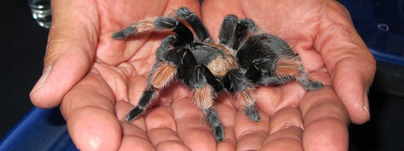 Arachnofobie - strach z pavouků